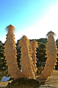 A peculiar tree in the gardens of Nijo Castle, Kyoto.