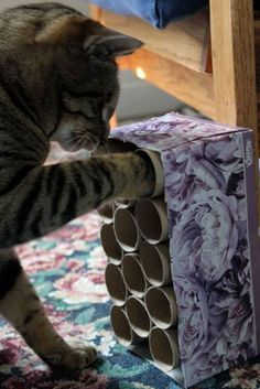 cat enrichment idea. glue toilet paper rolls together and put treats inside. This would be good for ferrets too, mine would love to shove their little noses in and knock things over