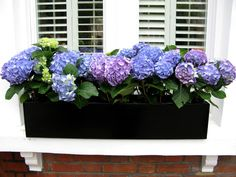 window boxes london, england - Yahoo Image Search Results Insulate Windows Generally, insulation is connected