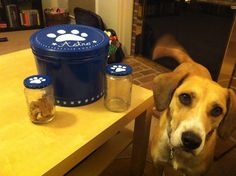 Popcorn tin and pickle jars plus spray paint and a paint pen make easy DIY personalized dog food bin and treat jars!