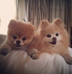 IT'S BOO AND BUDDY!!!!