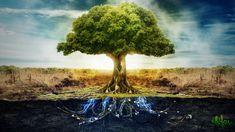 Beautiful Tree HD desktop wallpaper Widescreen Fullscreen