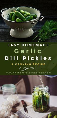 Easy Homemade Garlic Dill Pickles (A Canning Recipe) – Food Recipes Garlic Dill Pickles, Pickled Garlic, Homemade Pickles, Pickles Recipe, Canning Pickles, Real Food Recipes, Healthy Recipes, Canning Recipes, Diys
