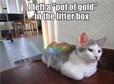 z-funny-animals-231 funny animal pictures pictures funny Animals