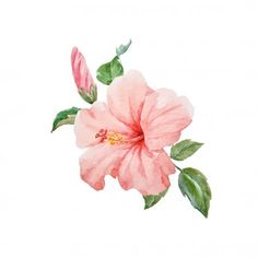 Best Cost-Free Hibiscus watercolor Thoughts Grow tropical hibiscus with regard to a major, vivid search on your lawn, terrace or patio. Hibiscus Bouquet, Hibiscus Tree, Hibiscus Flowers, Tropical Flowers, Hibiscus Garden, Growing Hibiscus, Lilies Flowers, Blue Hibiscus, Exotic Flowers