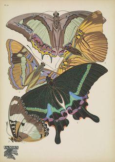 https://flic.kr/p/DKCMjg   n20_w1150   Papillons;. Paris,Tolmer[ca. 1925]. biodiversitylibrary.org/page/48852977