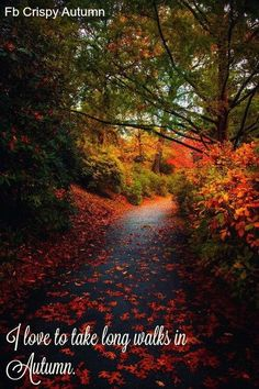 Long walks in Autumn
