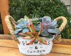 Country chic succulent basket/vintage egg basket/miniature
