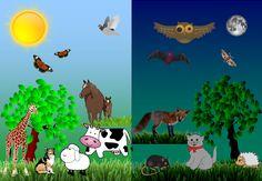 Animale diurne și animale nocturne Blog, Blogging
