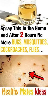 Homemade Insect Spray No-one wants insects in their home but, there are many people who do not want to spray chemical insect sprays eith. Safe Cleaning Products, House Cleaning Tips, Cleaning Hacks, Household Products, Household Tips, Home Remedies For Roaches, Get Rid Of Flies, Get Rid Of Ants, Diy Pest Control