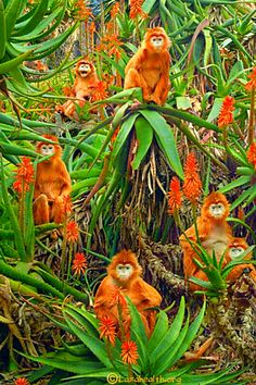 Nature paints the most beautiful masterpieces: Monkeys in the tropics