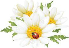 картинки цветы ромашки нарисованные