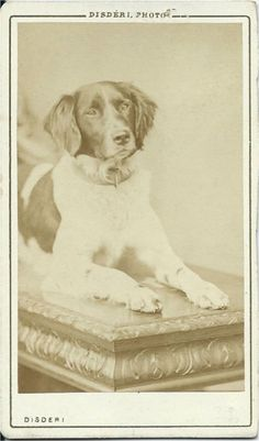 c.1860s cdv of the photographer André-Adolphe-Eugène Disdéri's dog, Corral. From bendale collection