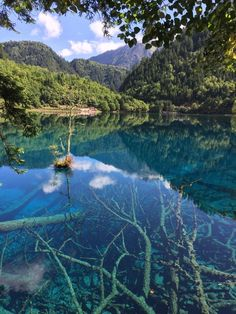One of the lakes of Jiuzhaigou - China before the devastating earthquake last August [OC] [2317x3089] : EarthPorn