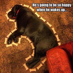 This Labrador Retriever will love it when it wakes up! #labradorretriever