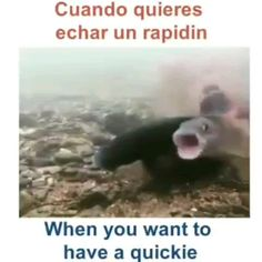 Funny Spanish Lesson- Going for a Quickie 🤣 All Funny Videos, Funny Video Memes, Funny Relatable Memes, Funny Jokes, Hilarious, Funny Spanish Memes, Spanish Humor, Funny Cute, The Funny
