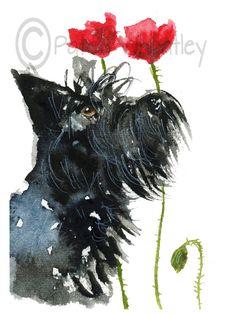 Scottie Dog lámina Scottish Terrier 'Amapolas' 28
