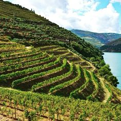 18 April 2016 Alto Douro In the northeast of Portugal with more than 26000 hectares classified by UNESCO as World Heritage in the cultural landscape category. It is surrounded by mountains that give you mesological and specific climatic characteristics. Bathed by the Douro River is part of the so-called Douro Wine Region produces wine for over 2000 years including the world-famous Port Wine. Região Vinhateira do Alto Douro No nordeste de Portugal com mais de 26 mil hectares classificada pela…