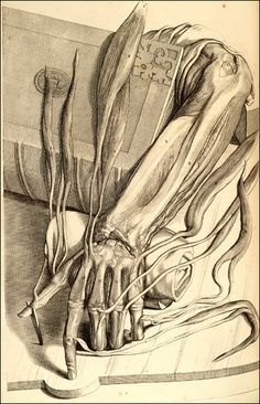 Ontleding des menschelyken lichaams...  Amsterdam, 1690. Copperplate engraving with etching. National Library of Medicine.  Govard Bidloo (1649-1713) [anatomist];  Gérard de Lairesse (1640-1711) [artist]  Bidloo's realistic anatomy has affinities to trompe l'oeil and still-life, two popular genres of 17th-century Netherlandish painting that often featured bones and other symbols of death.