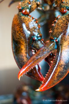 How to Boil Lobster | from Kitchen Confidante