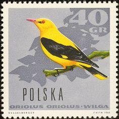 Polonia - Pájaro Oriol