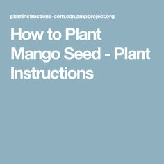 How to Plant Mango Seed - Plant Instructions