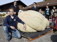 Record mondial de la plus grosse courge. Beni Meier de Pfungen (ZH) (photo) pose devant sa courge de 953,5 kilos. (Dimanche 5 octobre 2014)