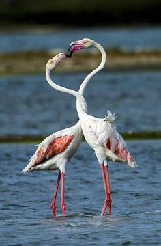 Love Little Birds, Love Birds, Beautiful Birds, Animals Beautiful, Flamingo Pictures, Bird Pictures, Cute Animal Pictures, Tropical Birds, Colorful Birds