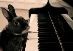 Here comes Peter Cotton Tail hopping down the bunny trail....wow he's musical