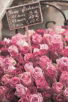 French market roses