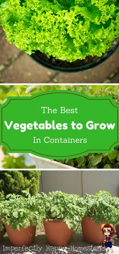 Container Gardening For Beginners The best vegetable to grow in pots and container gardens. - Vegetables in pots is a great way to extend your growing space; and as backyard homesteaders we are always looking for that! Growing Vegetables In Pots, Growing Tomatoes In Containers, Container Gardening Vegetables, Vegetable Gardening, Grow Tomatoes, Plant Containers, Garden Container, Gemüseanbau In Kübeln, Pot Jardin