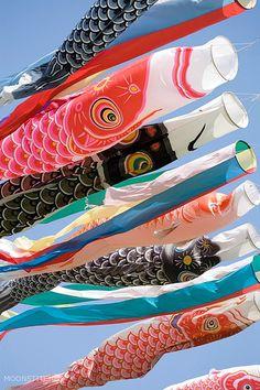 Carp decorations for Japanese boys´ festival