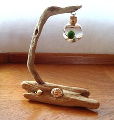 Hey, I found this really awesome Etsy listing at https://www.etsy.com/listing/164648310/new-driftwood-live-marimo-ball-zen
