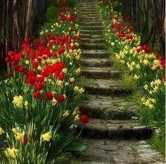 flores maravilhosas - Pesquisa Google