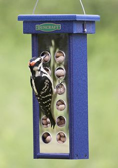 Reflections Woodpecker Feeder -- bird and peanuts not included  : )