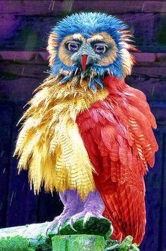 Rare Birds, Exotic Birds, Colorful Birds, Pretty Birds, Beautiful Birds, Animals Beautiful, Owl Pet, Owl Pictures, Interesting Animals