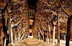 Laisves aleja (Freedom Avenue) in Kaunas, Lithuania in winter.