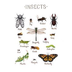 Insects Field Guide Art Print / Insect Collection / Watercolor Painting / Entomology Guide / Nature Print / Bug Art