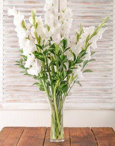 Gladiolus On Pinterest Gladioli Gladiolus Flower And Gladiolus