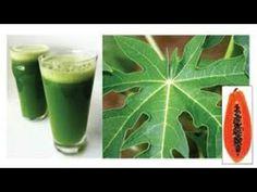 Los Beneficios Para La Salud Que Tienen Las Hojas De Papaya Nunca Lo Imagine! - YouTube