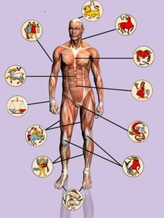 Medical Astrology Body Parts Ugly Hair, Medical Astrology, Eye Pain, Mammary Gland, Pregnancy Problems, Dental Problems, Body Organs, Diet, Health