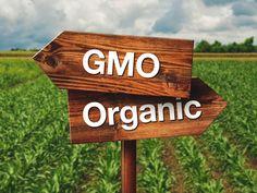 10 κίνδυνοι για την υγεία που σχετίζονται με την κατανάλωση κρέατος (GMO) Wellness Tips, Health And Wellness, Wellness Fitness, Fitness Diet, Cancer Causing Foods, Genetically Modified Food, Healthy Oils, Food Science, Organic Farming