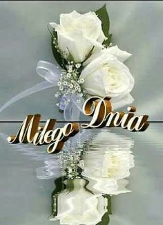 Good Night, Happy Birthday, Flowers, Album, Garden, Amor, Fotografia, White Flowers, Good Morning