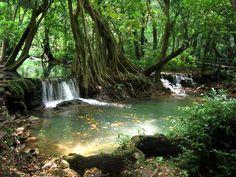 Tailândia usa Exército para combater desmatamento