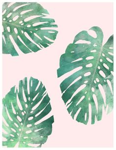 'Watercolor tropical monstera leaves on pink background' Art Print by Leah Biernacki Shades Of Green, Pink And Green, Blush Roses, Blush Pink, Watercolor Background, Background Pics, Green Backgrounds, Iphone Backgrounds, Tropical Leaves