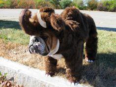 Bully Mammoth :)