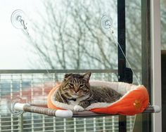 Super Stylish Cat Houses, Furniture & Home Essentials For The Discerning Cat Lover