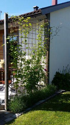 Spalje clematis och lavendel clematis lavendel och Spalje is part of Diy garden trellis - Back Gardens, Outdoor Gardens, Garden Trellis, Clematis Trellis, Diy Garden, Garden Ideas, Balcony Garden, Garden Paths, Plant Trellis