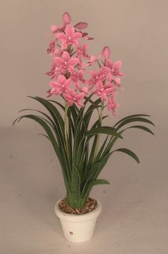 Image result for miniature plants and flowers