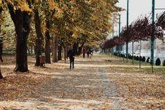 Railroad Tracks, Sidewalk, Outdoor, Outdoors, Side Walkway, Walkway, Outdoor Games, The Great Outdoors, Walkways